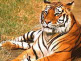 idia wildlife tour